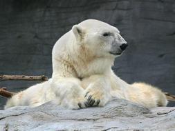 Tarea escrita 1 - Opinión: ¿Qué pensar de los parques zoológicos? ¿Son buenos o malos?